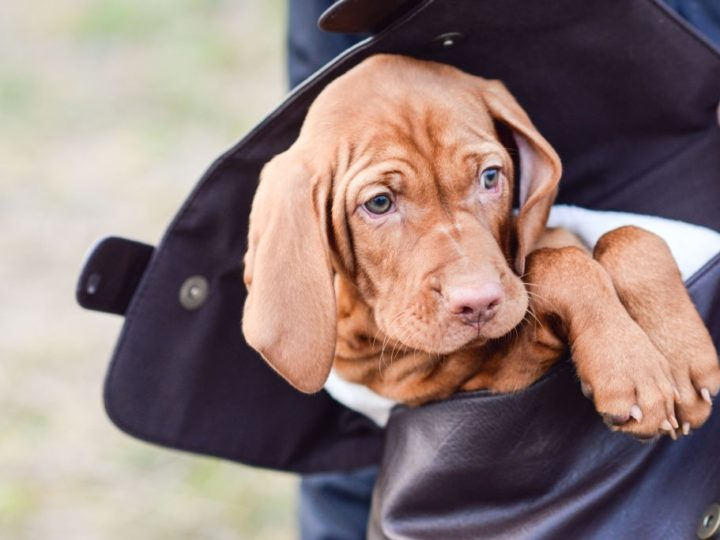 Everything you need to know before getting a puppy or dog