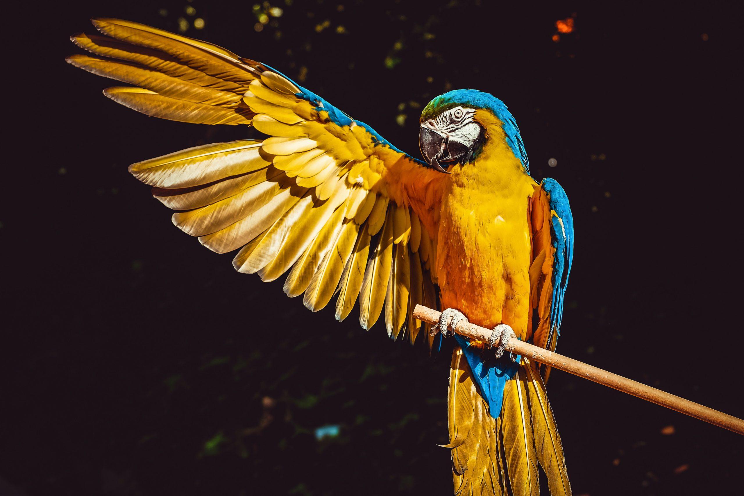 pet bird species