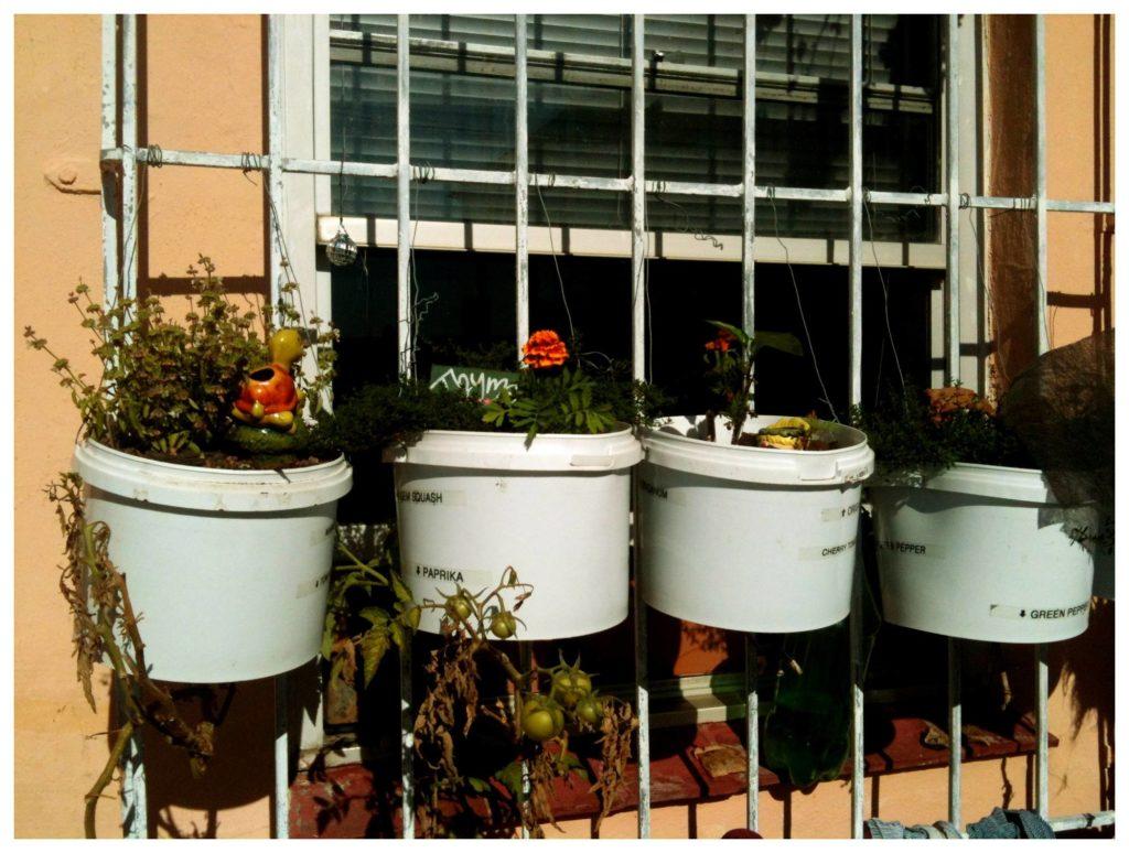 Bucket vertical Garden