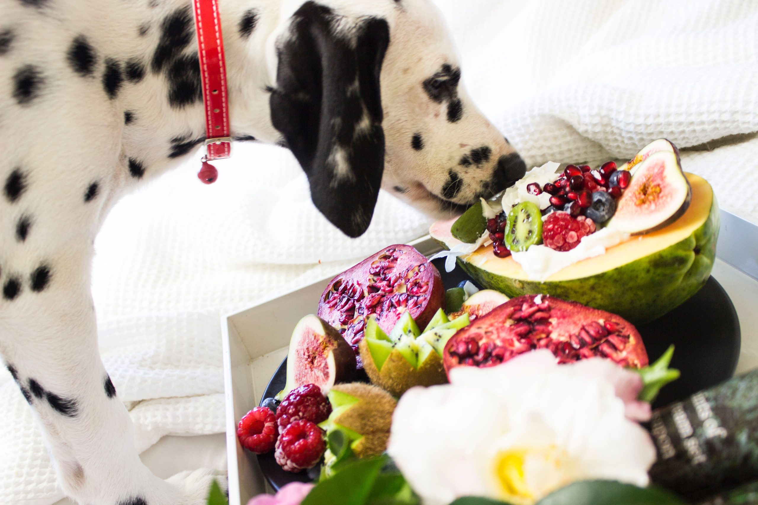 what fruits and vegetables can dogs eat
