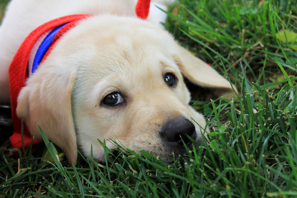 Best dogs for first-time owners