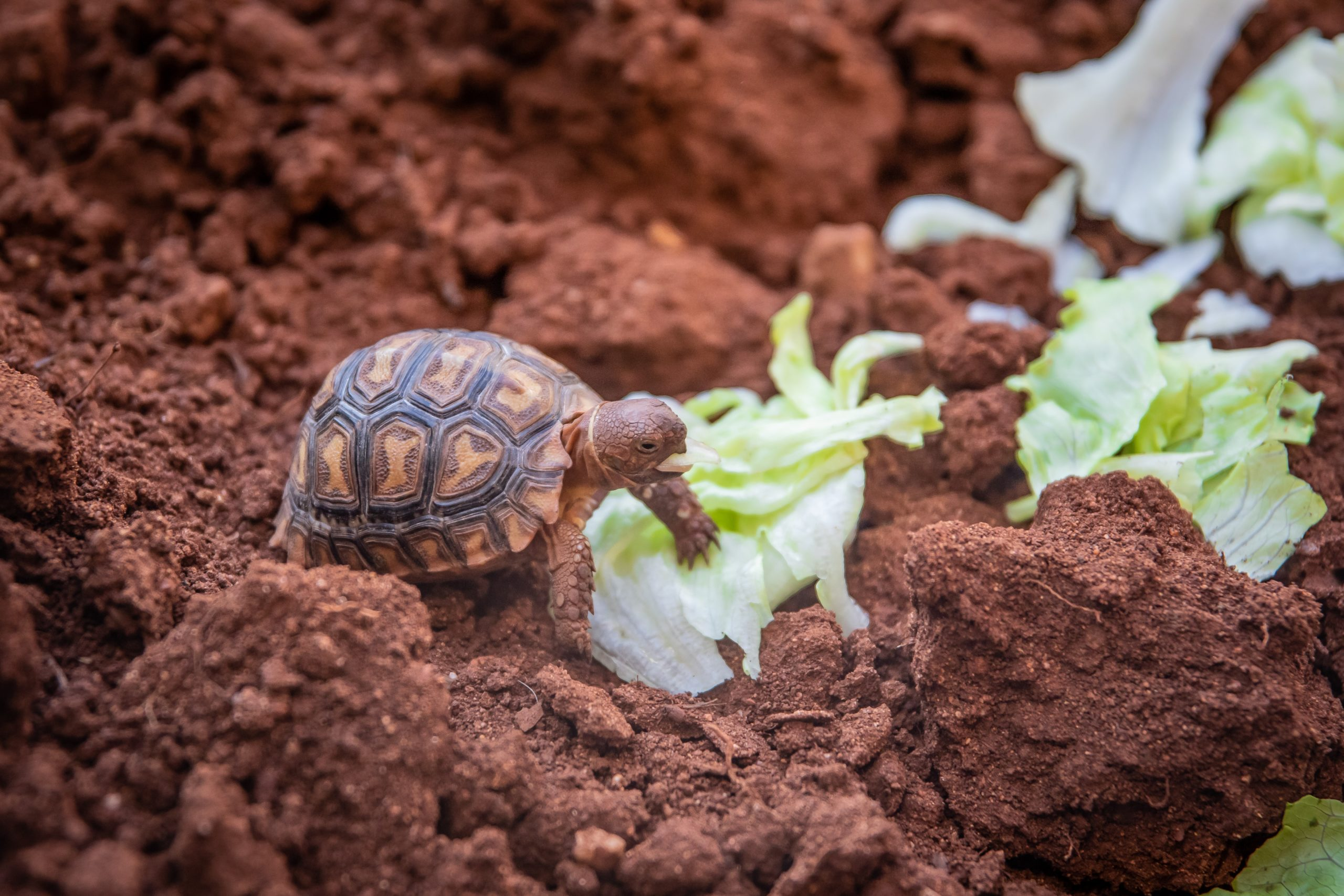 how to take care of a baby turtle