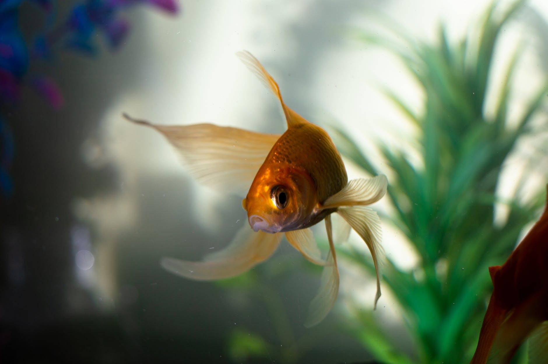 easy aquarium plants