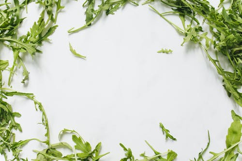 Oregano Oil Benefits- Health Benefits and Uses of Our Favourite Italian Herb