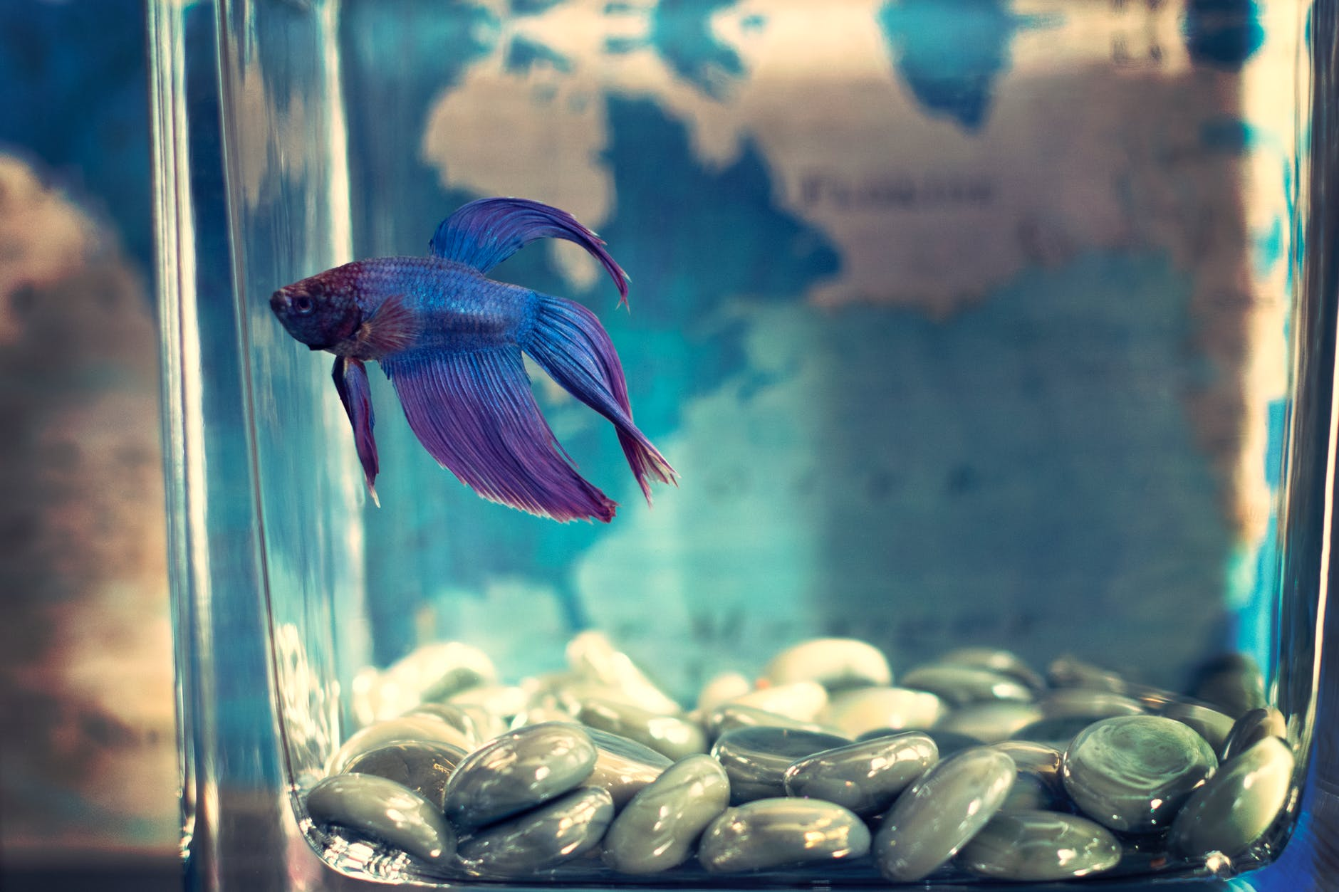 steps to clean a betta fish tank