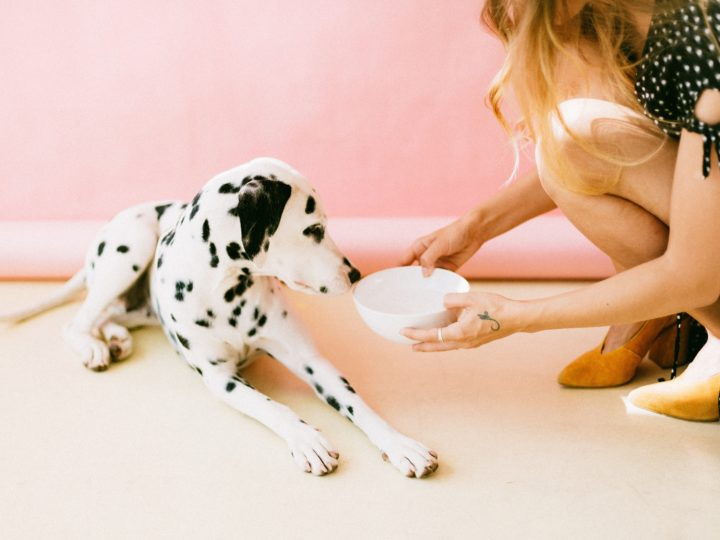 Best Dog Bowls To Feed Your Pup's