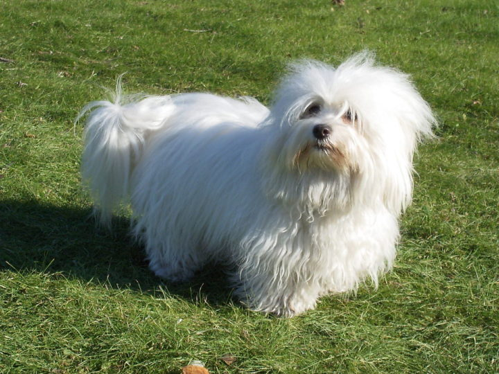 A Complete Guide: What Dog Breeds Are Hypoallergenic?