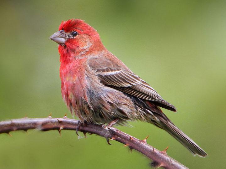 Top Quiet Pet Birds To Have A Peaceful Companion