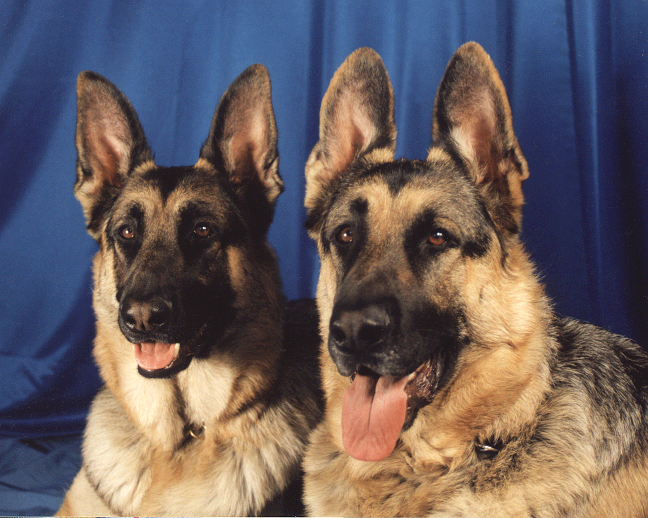 best guard dogs in the world