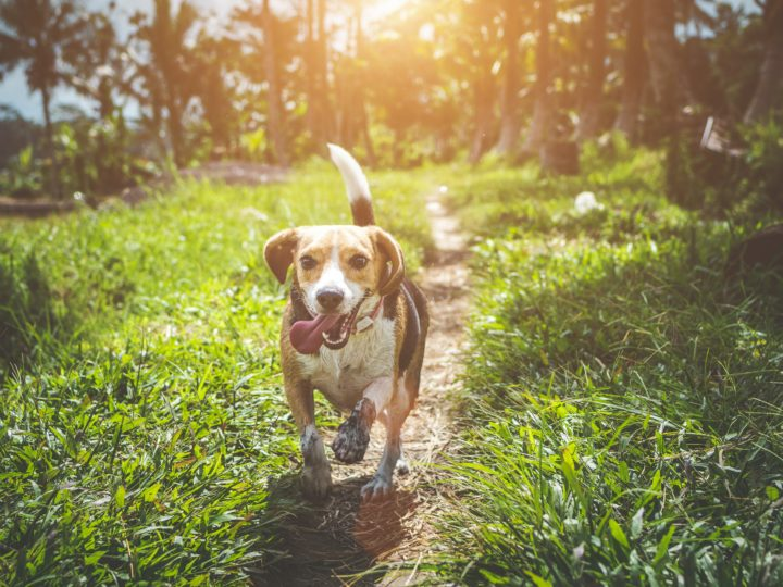 Healthiest Dog Breeds with Least Health Problems