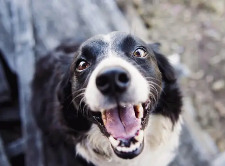 Dogs Scared Of? How to Help Dogs Overcome Their Fears