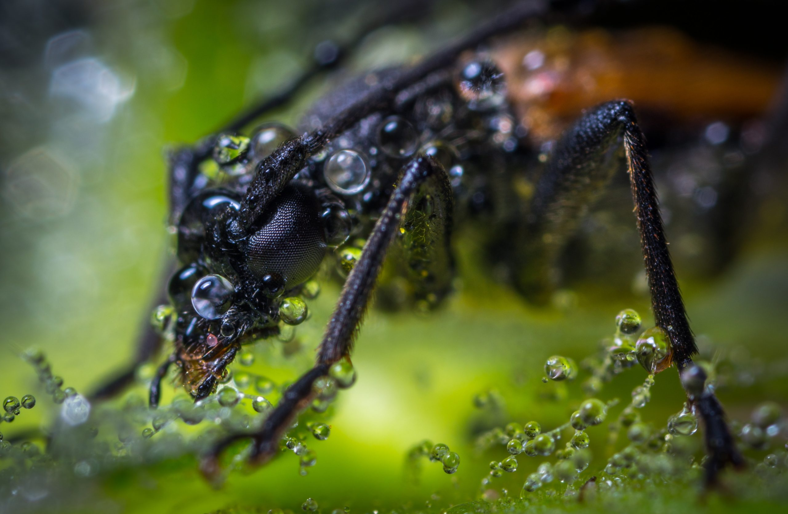 tips to get rid of waterbugs