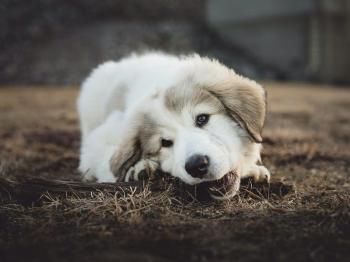 Best Bones For Dogs To Keep them Healthy