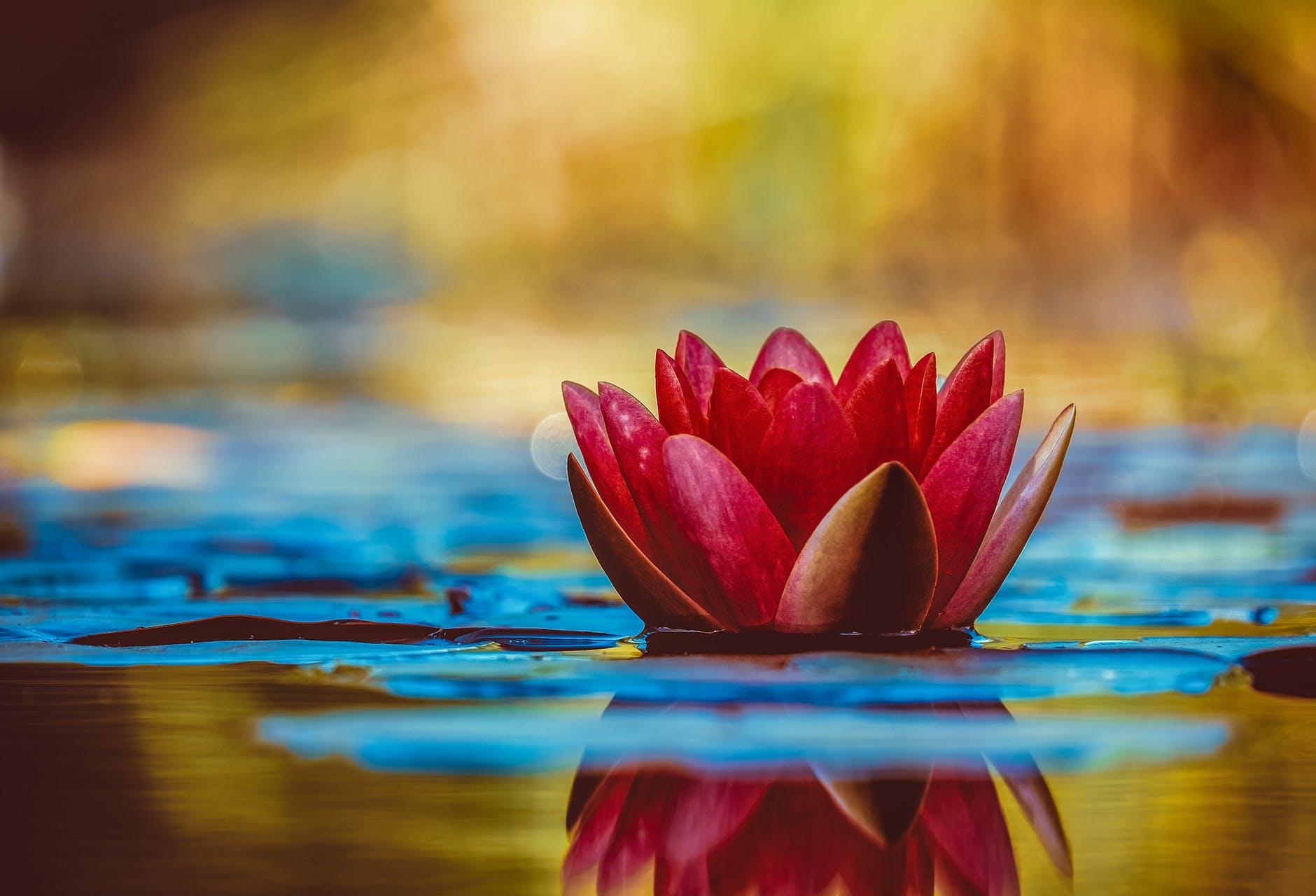 Types Of Lotus Flowers