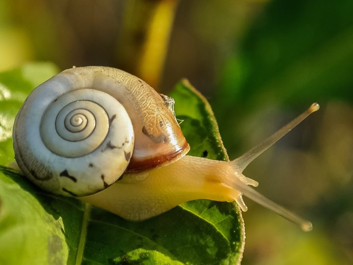 Best Snail Mucin Products For Healthy Skin
