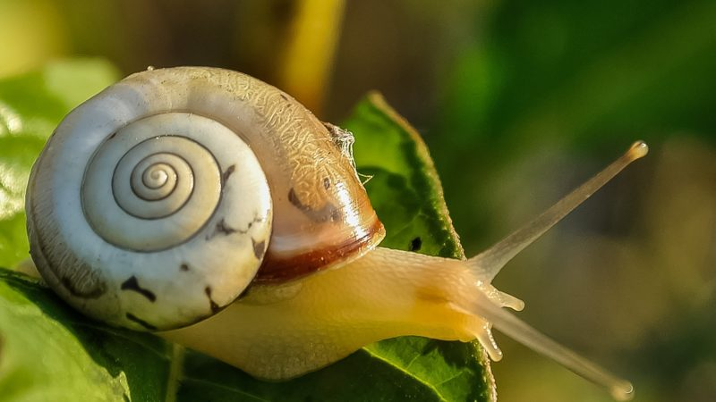 snail mucin for skin